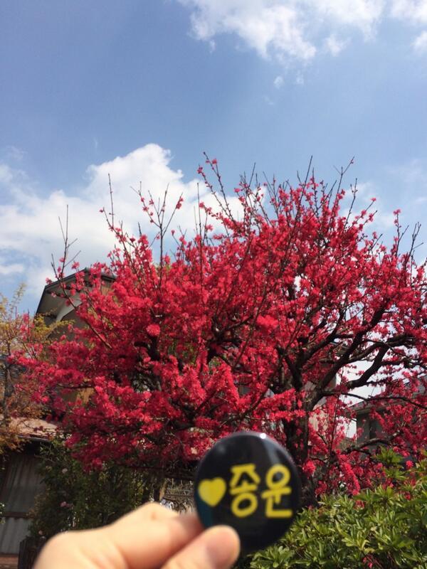 @SJ_YSTYLE - Japan