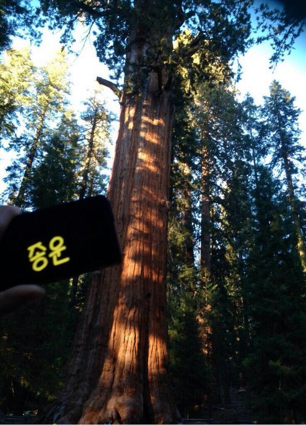 @Y480_ - Sequoia national Park, California