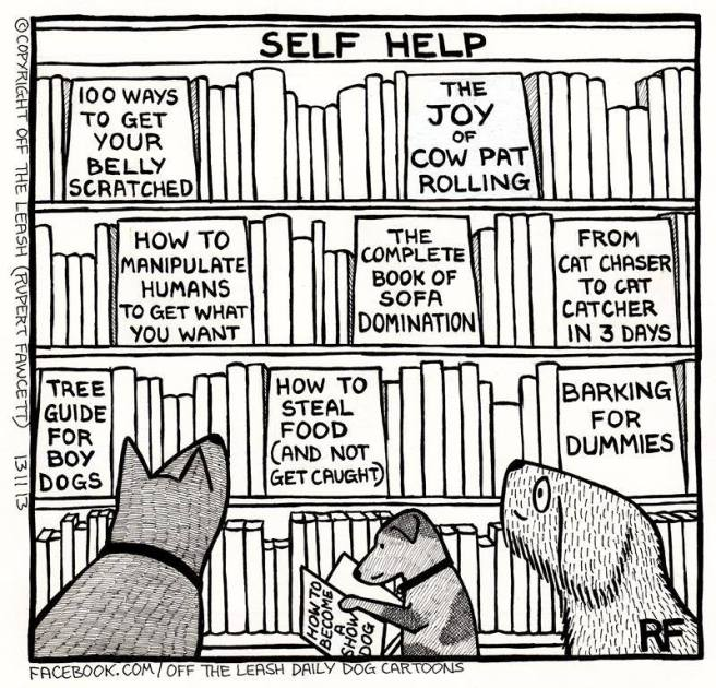 Doggy Bookstore